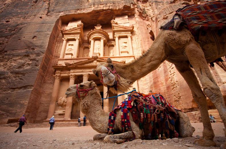 Camels Treasury Jordan